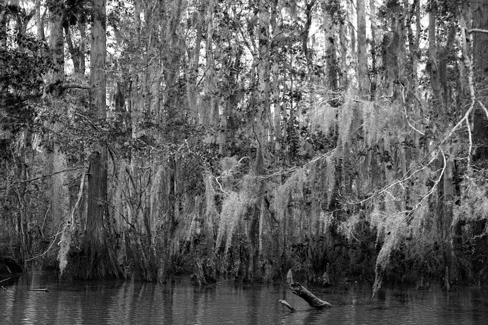 Swamp40