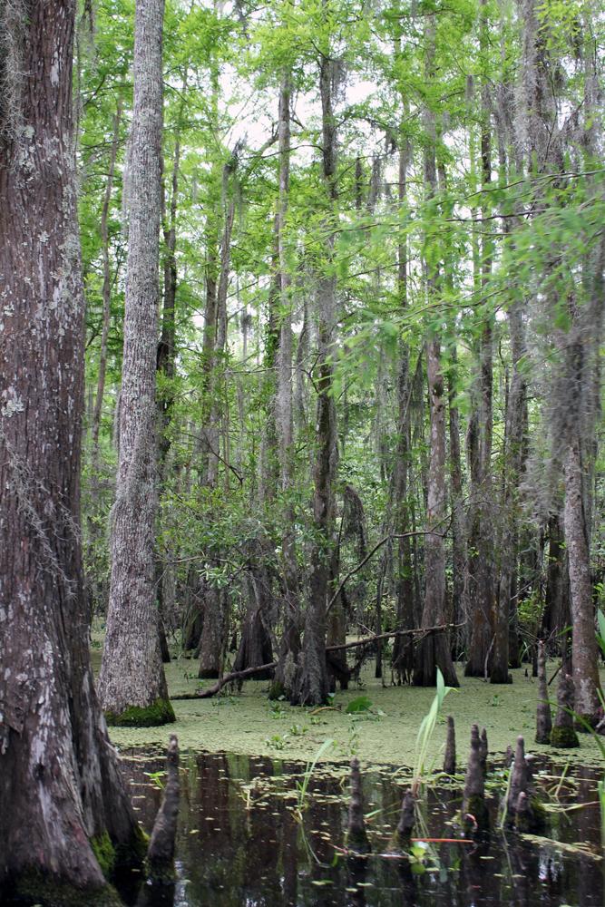 Swamp63